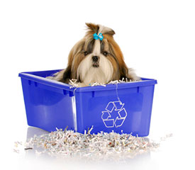 Funky Recycling Ideas for Pets
